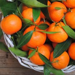 Orange Mandarin Flavor
